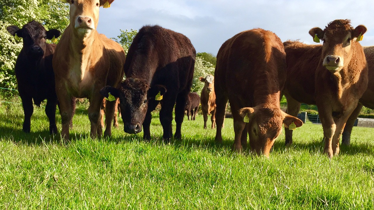 Coveney admits 2016 will be challenging for the beef sector