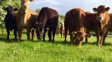 Ireland back in third when it comes to EU cattle prices