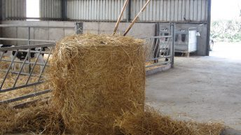 Bales of straw costing as much as bales of hay and silage