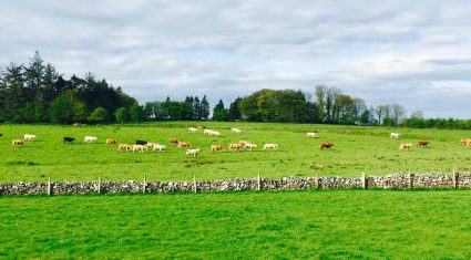 2015 set to be a year of mixed fortunes say Teagasc economists