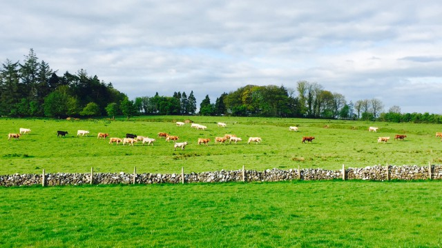 Teagasc to fill several communications roles ahead of Signpost launch