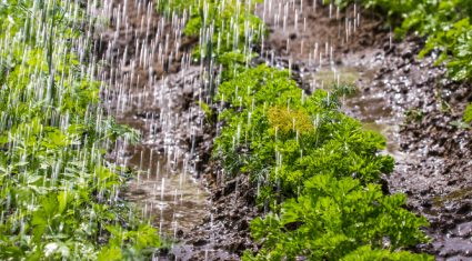 It's St Swithin's Day: Is the country set for 40 days of rain?