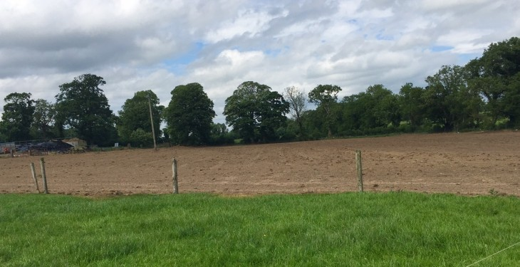 Thinking of reseeding? – Here's how to choose grass varieties