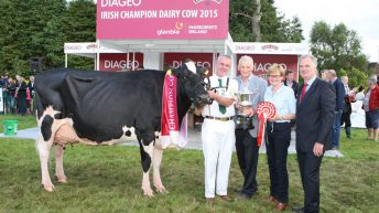 Cork breeder wins Diageo: Baileys Dairy Cow of the Year