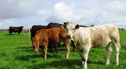 Ireland holds third on EU cattle prices league table