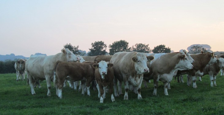 UK beef imports to Ireland up 15% year-on-year