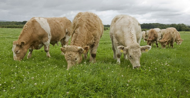 Beef quotes drop 10c/kg – Irish and UK difference now 98c/kg