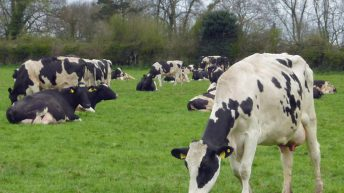 'Dairy farmers could face solvency issues if the current milk price remains low'