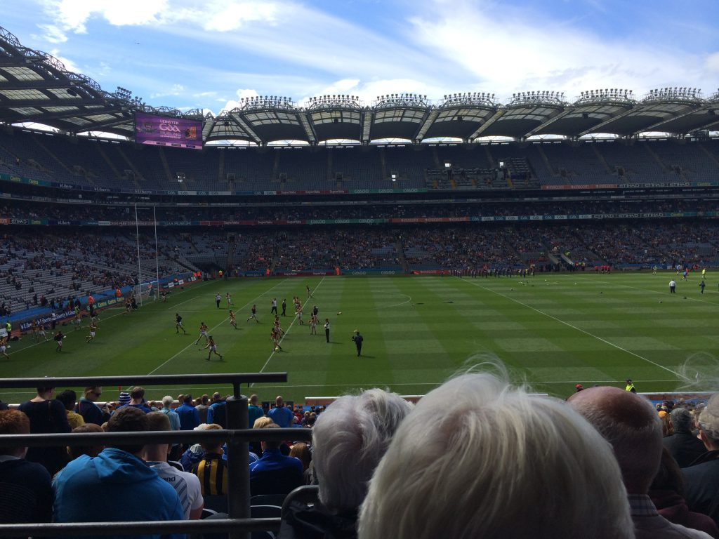 Forget about the cats, a hawk has deterred the Croke Park