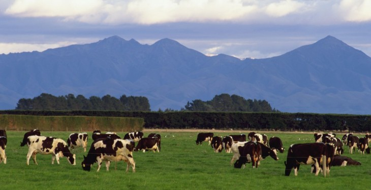 Fonterra forecasts farmgate milk price to drop below NZ$4/kg