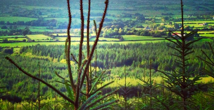 Importance of Leitrim's forestry sector highlighted at a recent forestry value chain tour