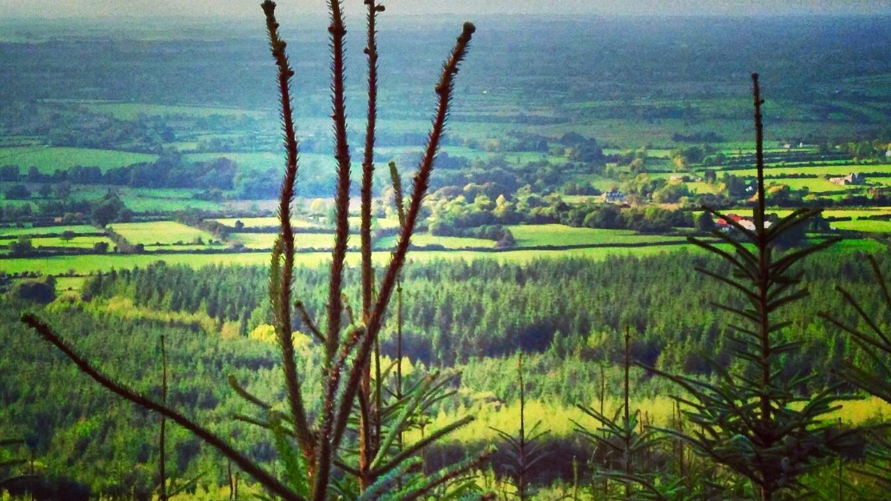 Forest Enterprise Limited rebrands to create Veon