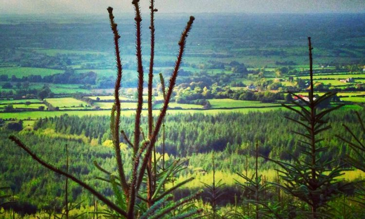 Teagasc to host series of young forest management walks
