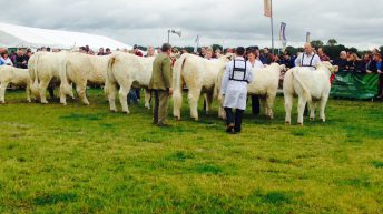 Chinese delegation visit Tullamore Show