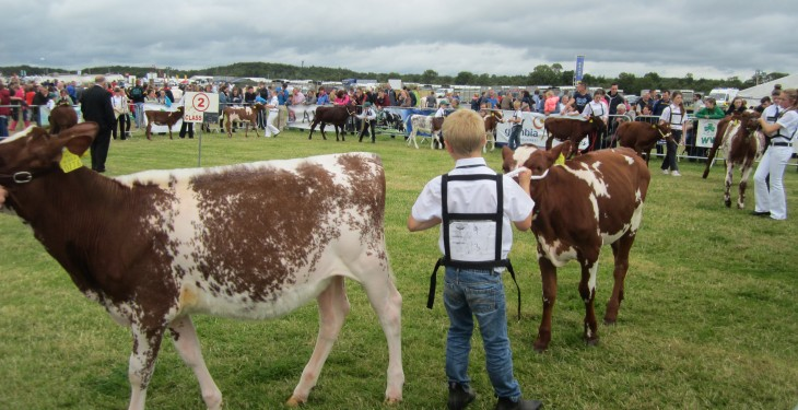 Tullamore Show results: Stockperson, Piemontese, Aubrac, Angus
