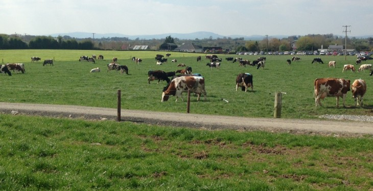 Reaction as dairy trade auction sees powder price fall to 11c/L equivalent