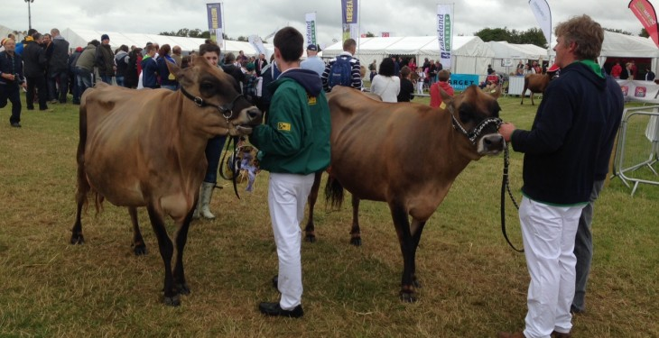 Tullamore Show Results 2015