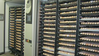 Moy Park invests £180,000 at Northern hatchery