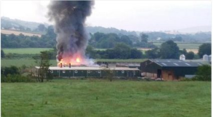 400 piglets and 32 sows killed in Co. Tyrone farm fire