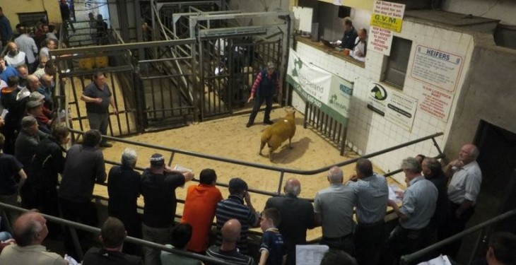 Rams make €940 at Sheep Ireland 'elite' five-star sale