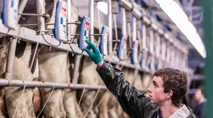 Average dairy herd to grow by 33 cows – Extra labour needed for dairy farms