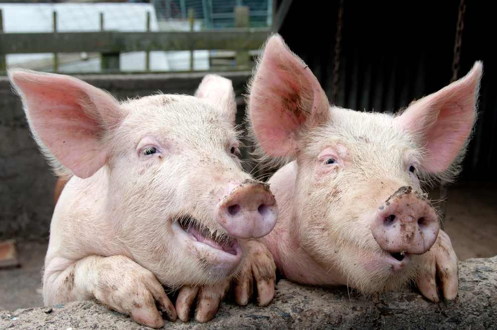 Teagasc to appoint new Pig Development Officer at Ballyhaise