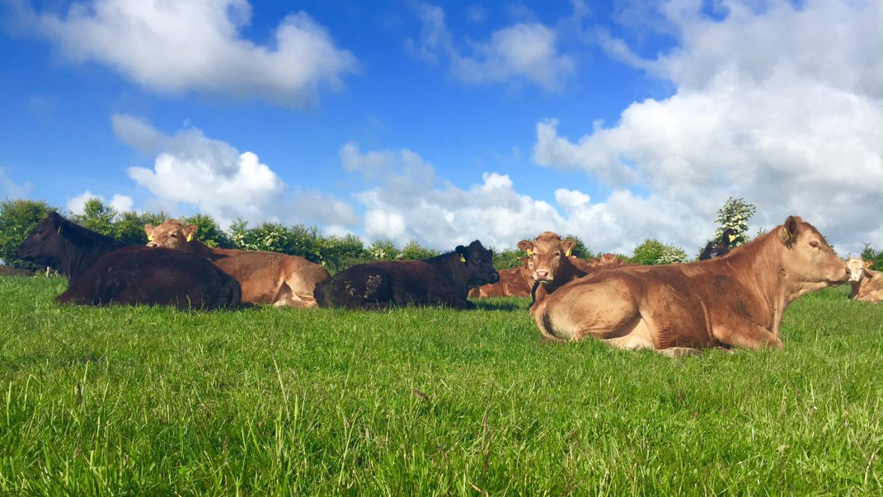 Irish cattle slaughterings up 4% on July 2014 – CSO