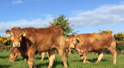 Ireland drops to fifth on EU cattle prices league table