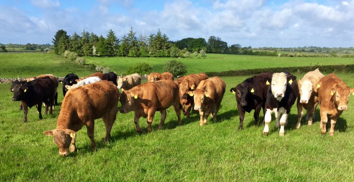 Beef prices remain steady but a break in the weather could influence numbers