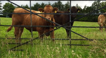 Irish beef exports face difficulties as UK moves to 'lifetime' quality assurance