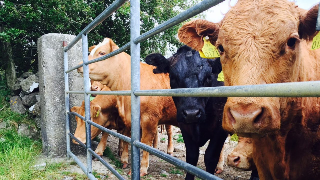 Beef factories holding quotes as farmers advised to 'sell hard'
