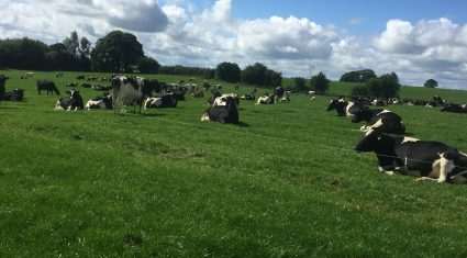 'Dry cow tube selection will become more important with shorter dry periods'