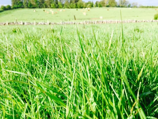 Grass advice: Building begins for autumn