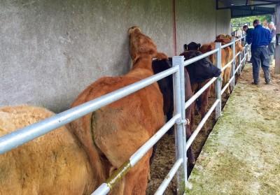 herd test
