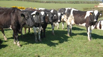 Poor milk prices fail to slow Irish milk production (up 12.2% in July)