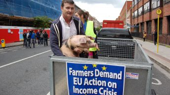 IFA calls for the introduction of pigmeat export refunds