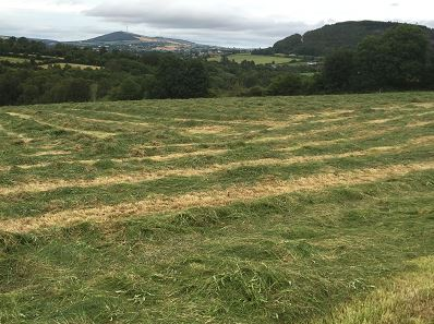 How long should you wait to cut silage after applying Nitrogen?