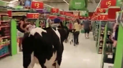 Video: Cows take over supermarket aisle as farmers protest over milk price