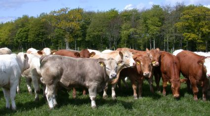 Second boat load of Irish live cattle leaves for Turkey