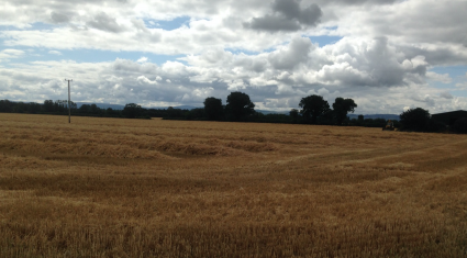 'Good crop yields and quality in Ireland; EU forecasts revised downwards'