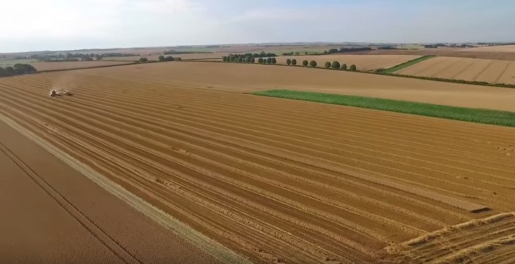 Video: UK farmer smashes world wheat yield record with 16t/ha