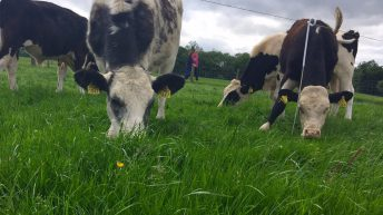 'Marketing additional beef volumes next year won't be hugely difficult'
