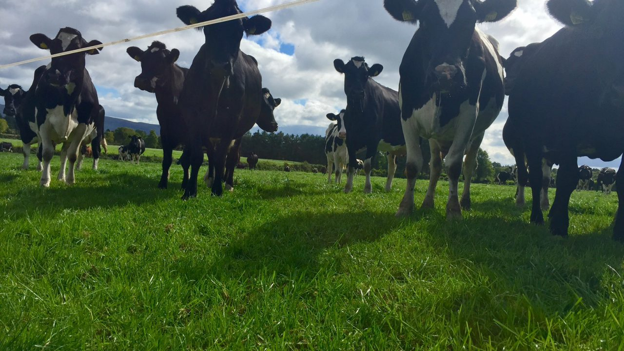 West of Ireland milk production surging ahead