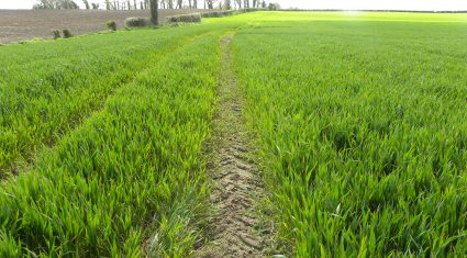 Here is the easiest way to control Black Grass in a direct drilling system