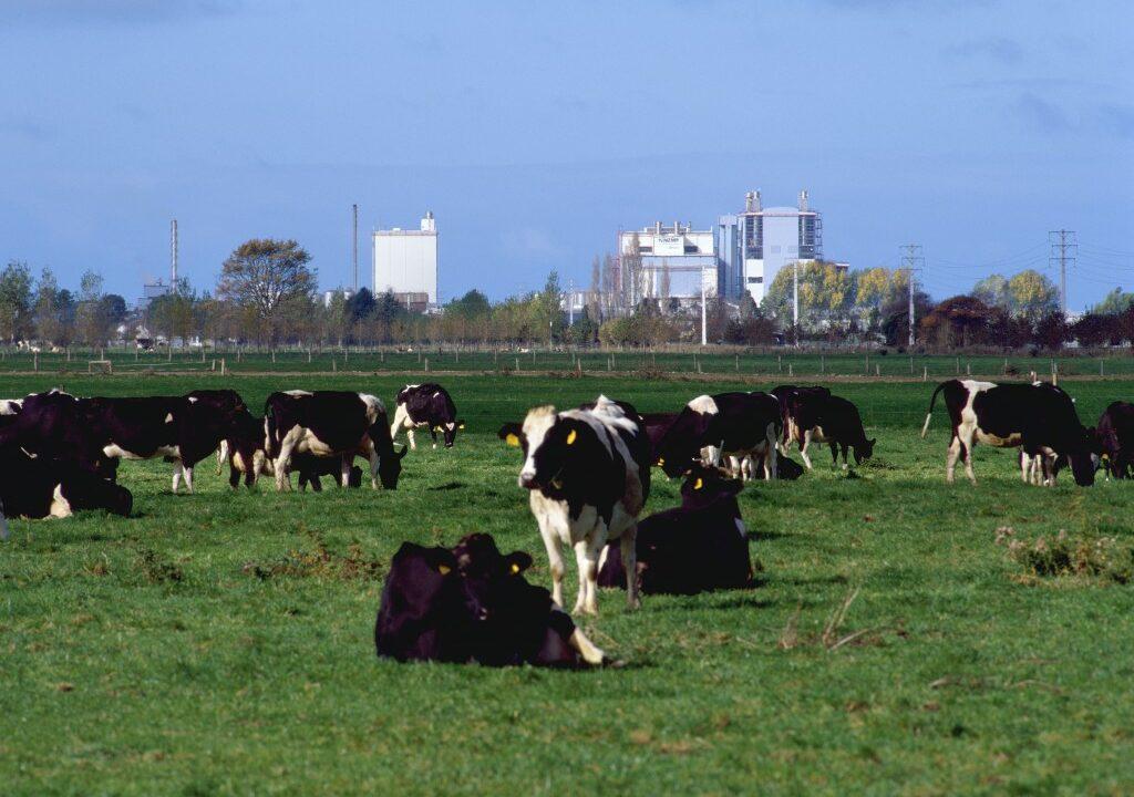 New Zealand milk production up 1.2% year-on-year