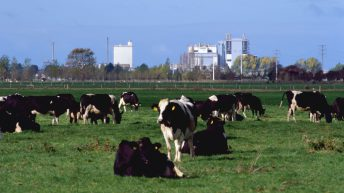 New Zealand milk production up 1.2% year-on-year