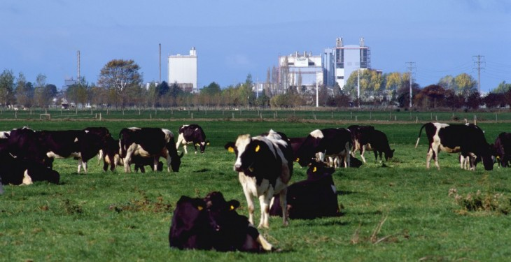 New Zealand dairy farmers get boost as Fonterra increases its forecast payout