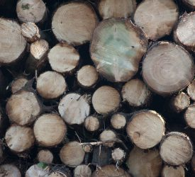 External review of forestry licensing set to commence