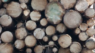 Forestry issues 'amount to a national scandal' – TD