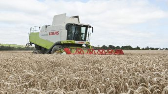 Grain price: Plenty of wheat around and it's not helping Irish prices